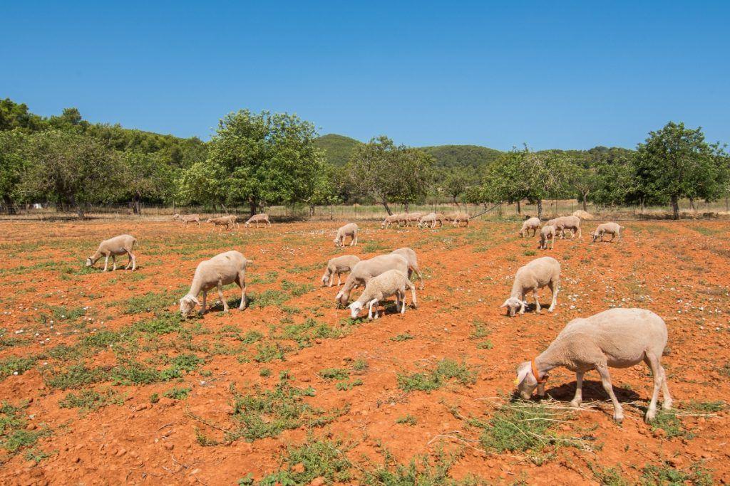 Carnicería de HiperCentro abastecida con carnes provenientes de granjas propias.